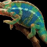 451-4514151_904244688-chameleon-v
